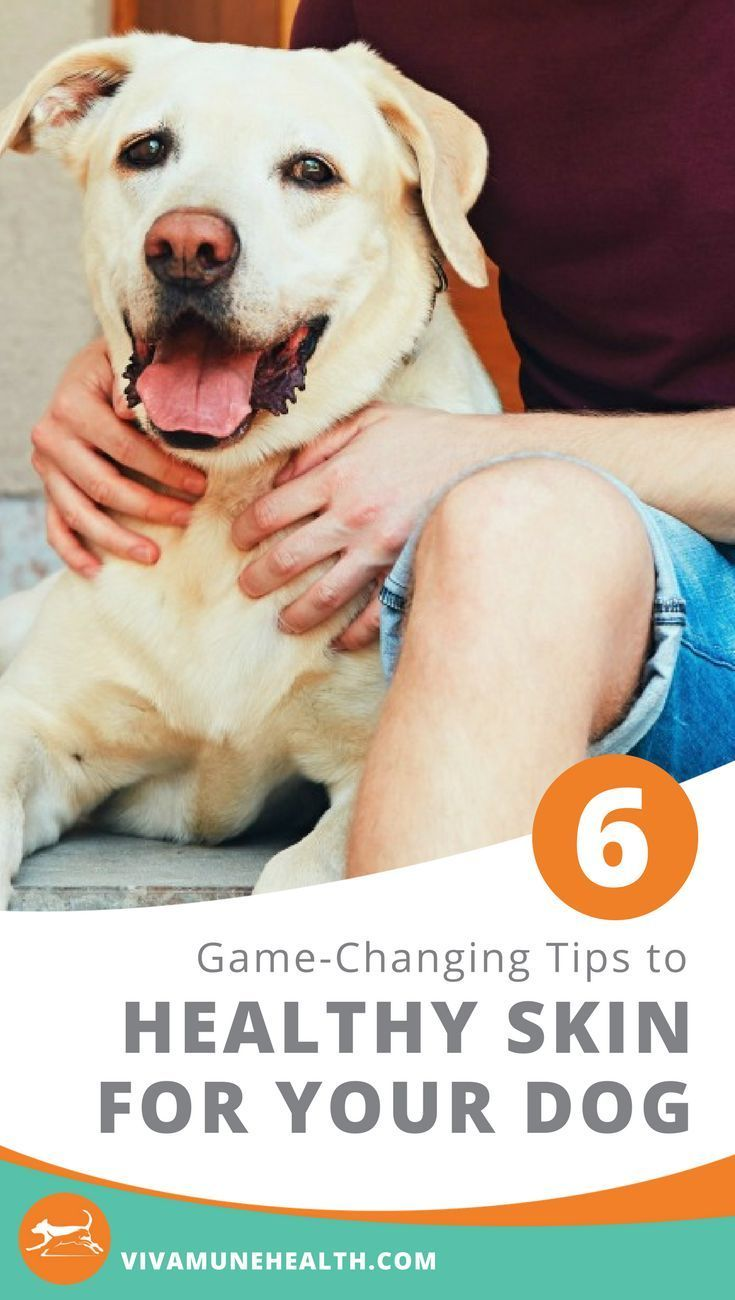 Six Game Changing Tips To Healthy Skin For Your Dog Embrace Pet