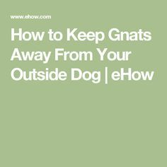 How to Keep Gnats Away From Your Outside Dog | eHow