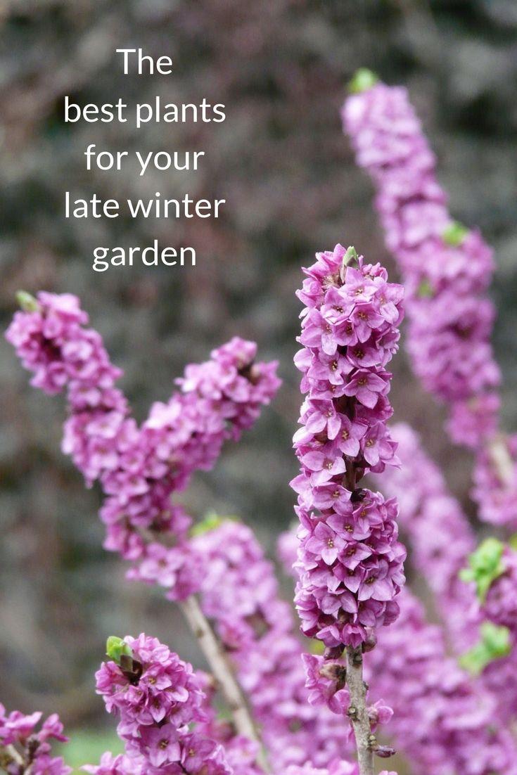 die 5750 besten bilder zu winter gardening tips auf pinterest, Gartengerate ideen