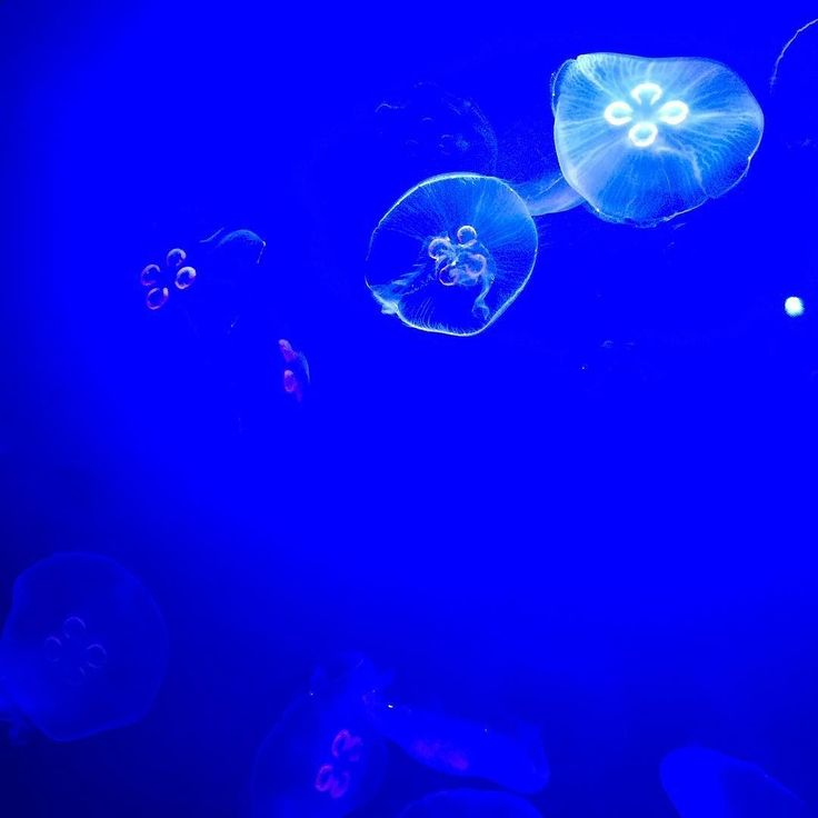 17 Best Ideas About Jellyfish Tank On Pinterest Things I