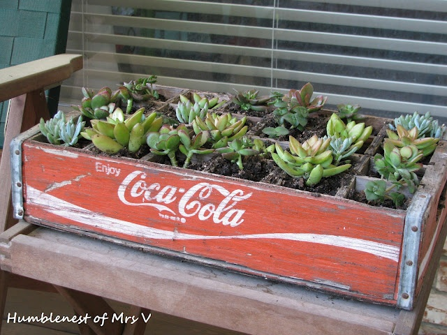 Cute succulent garden idea