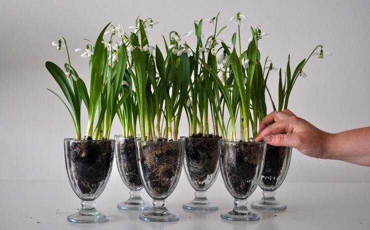 Celebrate Easter with a florist arranged flower bouquet in beautiful glass by Lisbeth Dahl Copenhagen Spring/Summer 13. #LisbethDahlCph #Celebrating #Easter #Flower #Decoration