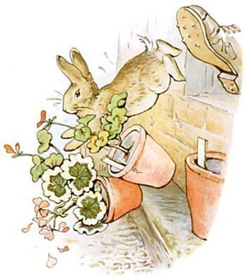 Mr MacGregor's boot and Peter knocking over pots of geraniums. Beatrix Potter.
