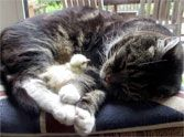 Fuzzy Chick and Sweet Cat Blissfully Nap Together - an Adorable Moment