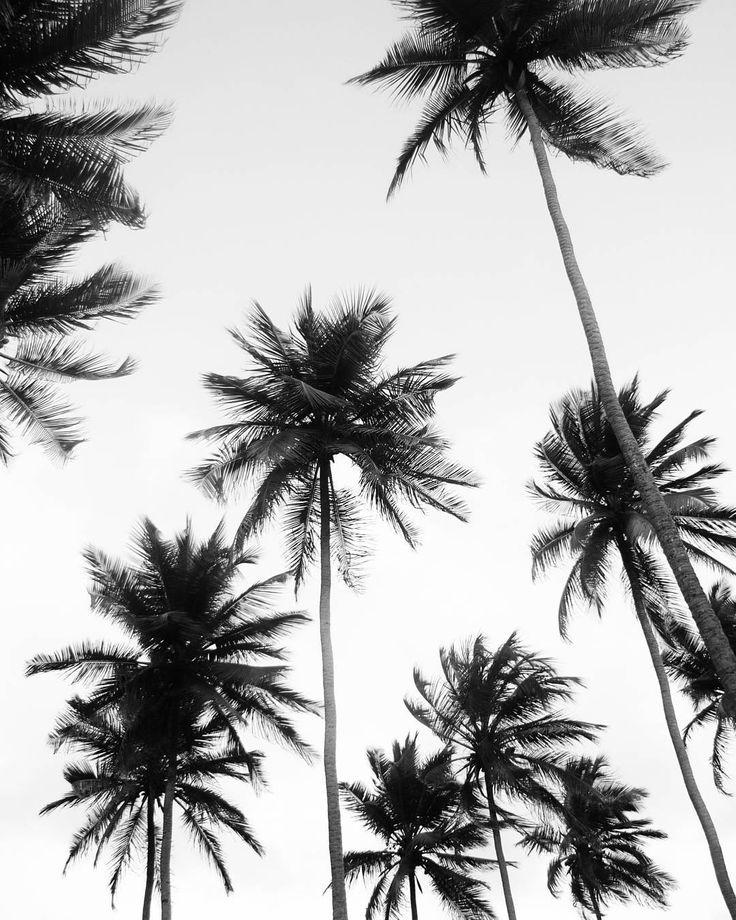 Las Palmas (2009) - #tbt #bnw #monochrome #blackandwhitephotography #bwphotography #instablackandwhite #blackandwhiteonly #flair_bw#bnw_captures#bnw_life #bnw_planet #travelmemories #intothewild #instatravel #wanderlust #travelphotography #venezuela #insta_beach