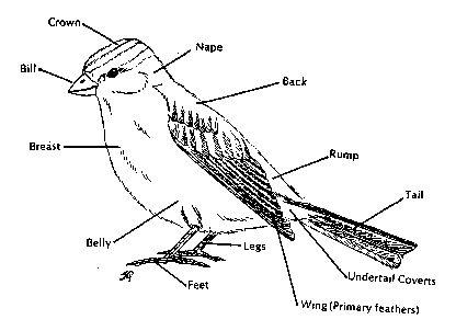 Parts Of A Bird Diagram
