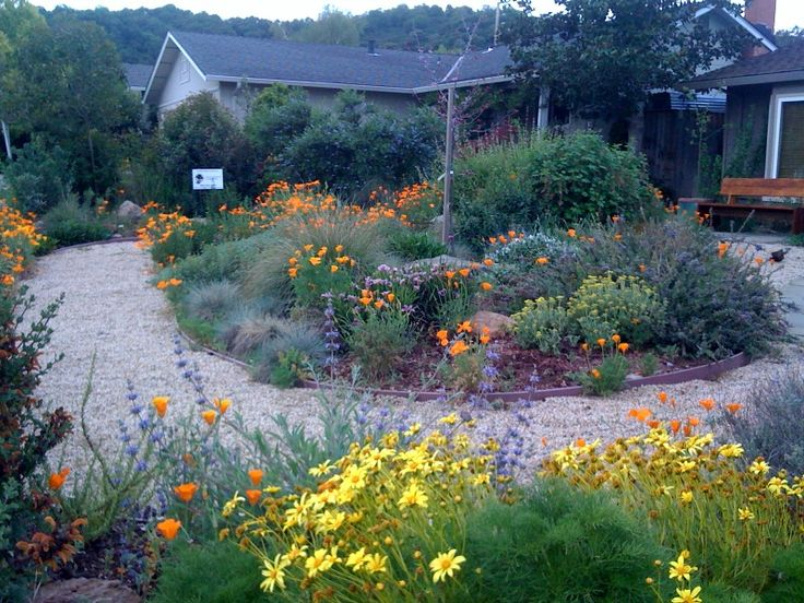 beautiful lawn alternative wildflower and native plant garden with central bermed bed and generous