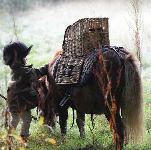 c38edc650 Kizzy   Etties Pony Adventures ( kizzy and etties ponies) • Instagram  photos and videos