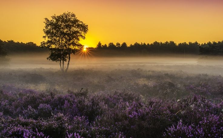 Перше сонце, Stefan Cruysberghs. Ловіть миті на Яндекс.Зображеннях.