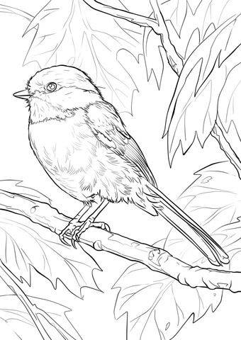 Black-capped Chickadee Coloring page We have these in the garden.