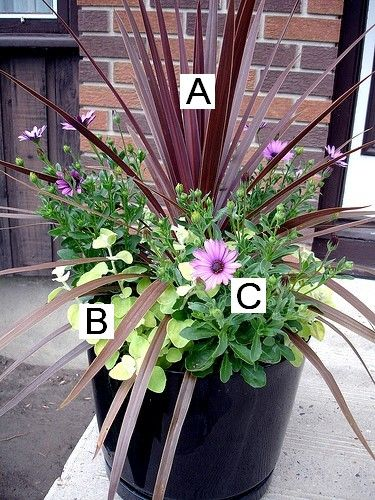 all types of potted plants- they tell you what's in each pot, you can can do it yourself.m