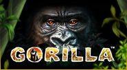 Gorilla kostenlos spielen