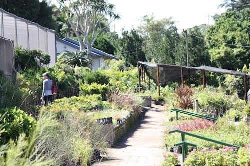 Dunrobin Nursery, Bothas Hill, spent many hours searching for gorgeous plants and having many delicious brunches