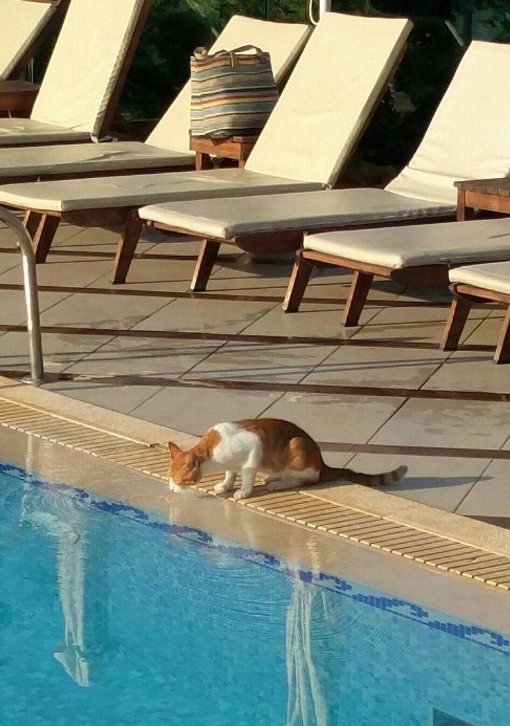 Cat drinking from a pool!