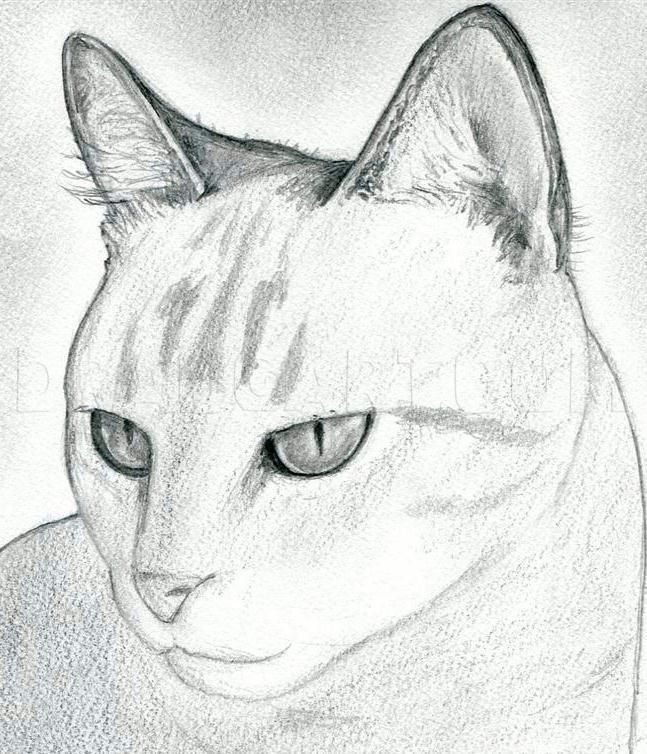 How To Draw A Cat Head Draw A Realistic Cat Step By Step Drawing Guide By Finalprodigy Dragoa Simple Cat Drawing Cat Drawing Tutorial Cartoon Cat Drawing