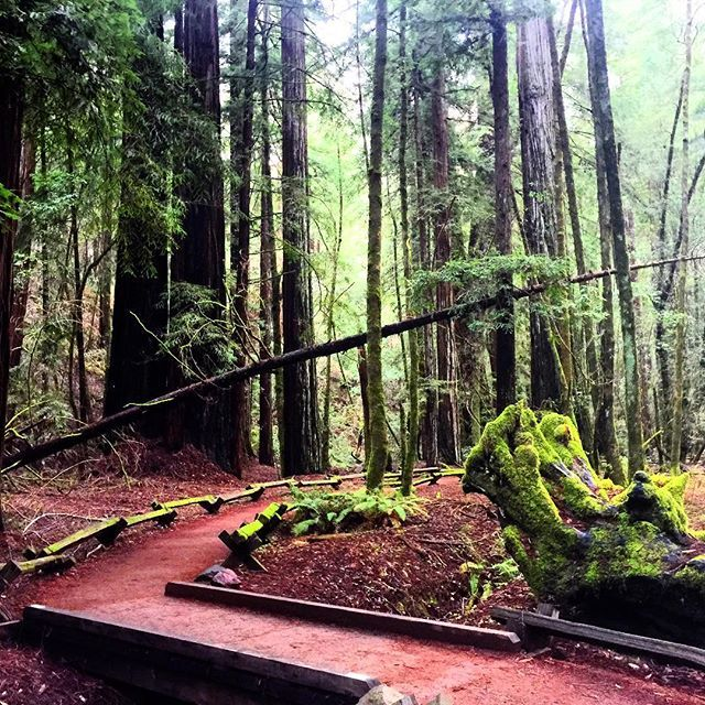 Caliparks : Armstrong Redwoods State Reserve