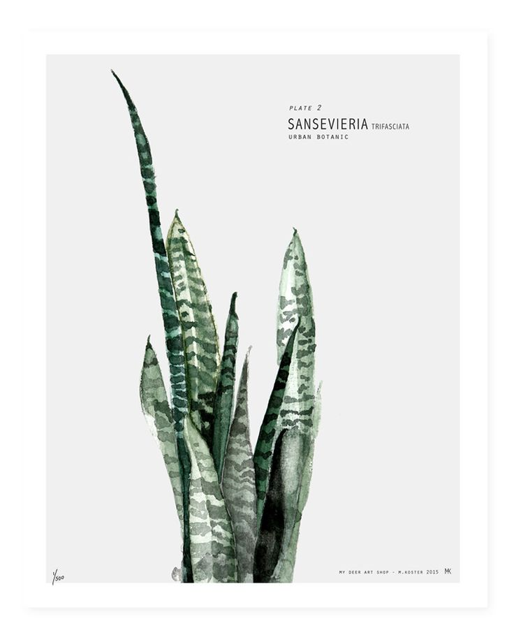 Limited Edition print Botanic Urban //  Plate 2. Signed and numbered. Watercolor #urbanbotanic