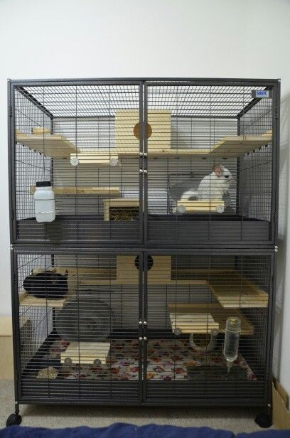 The new chinchilla cage (savic royal suite xl). Or should that be the new chinchilla palace. It is huge and they have so much space to run and jump about