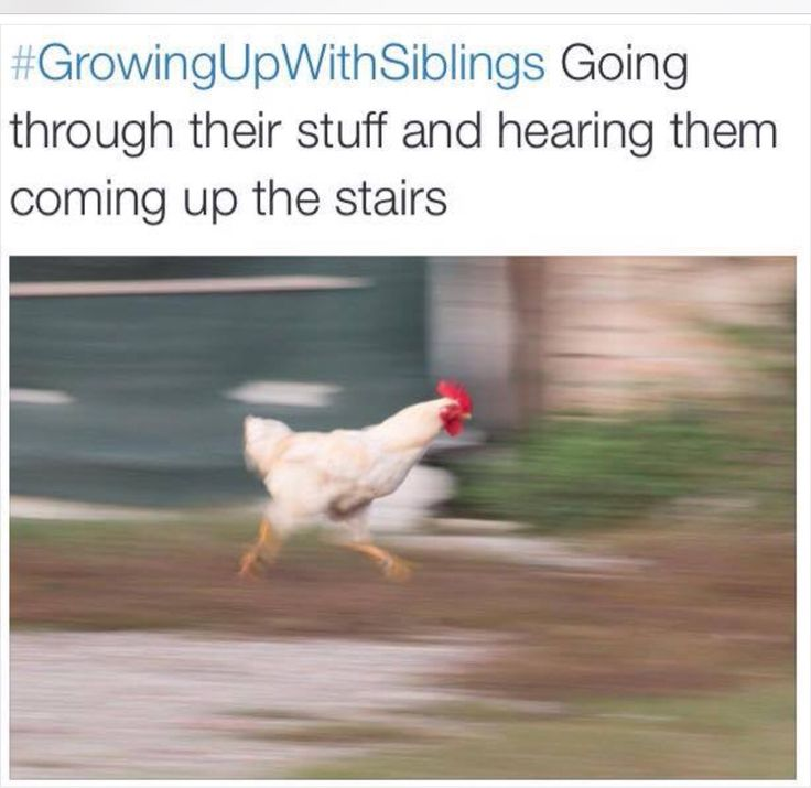 Funny Quotes About Siblings: Best 25+ Sibling Humor Ideas On Pinterest