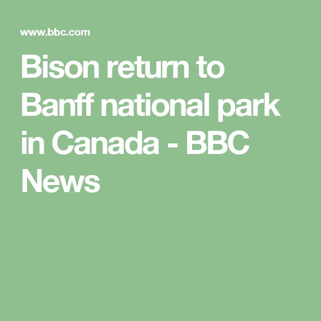 Bison return to Banff national park in Canada - BBC News