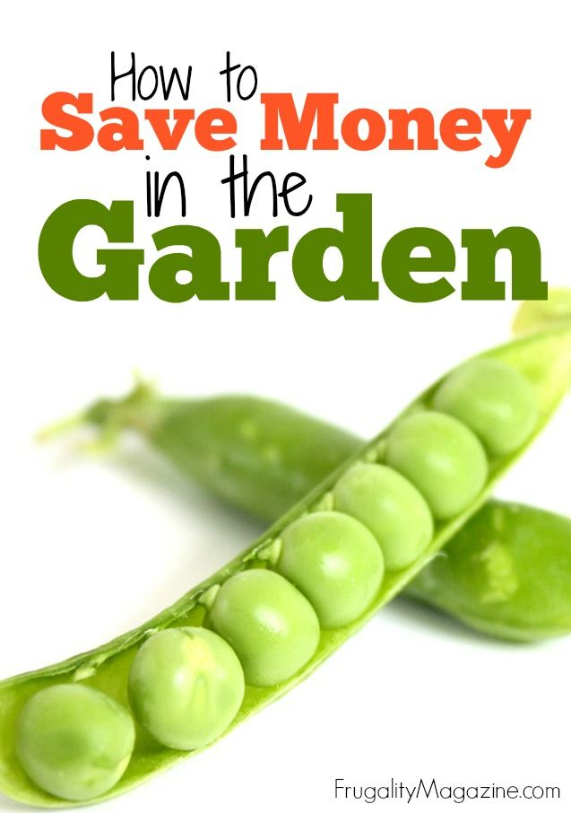 The purpose of this article is simple; I want to show you some of the ways to save money in the garden – without having to compromise on the quality of your vegetable harvest.