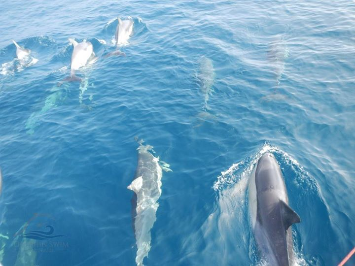 Amazing shot shared by @dolphinswimaust... One of the awesome stuff at #PortStephens!  #dolphins #psiloveyou