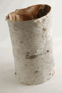 Need Birch Bark for a project? They sell it on this site.