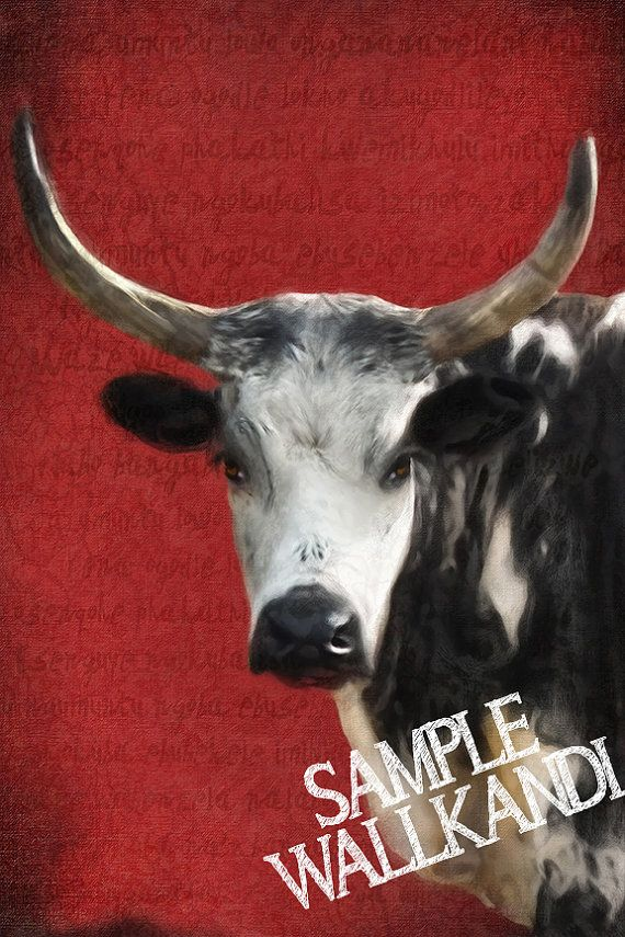 NGUNI COW  Oil Painting Print Wall Art  Red printable by WallKandi