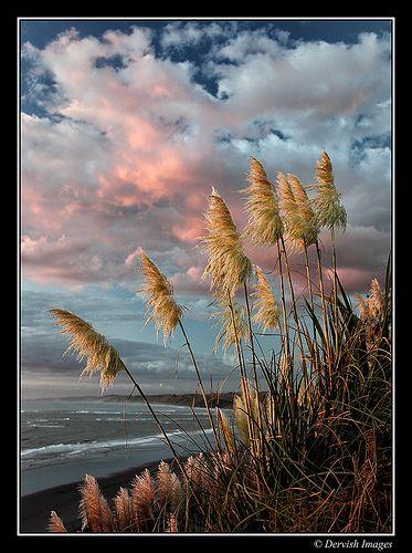 Toi Toi Grasses - memories