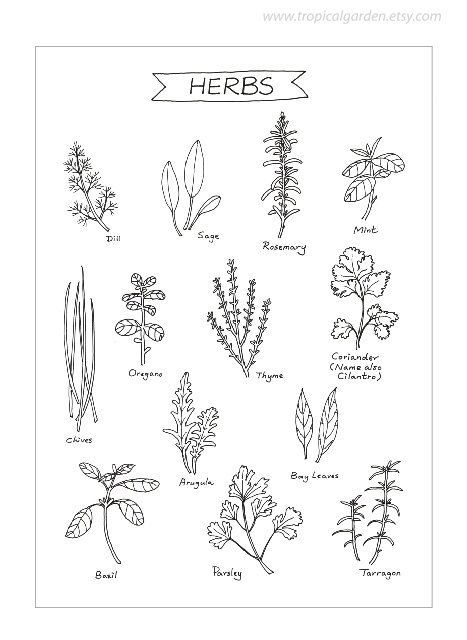 Herbs Kitchen Art – 8×11 Ink Illustration / Culinary Art Print – Kitchen Decor