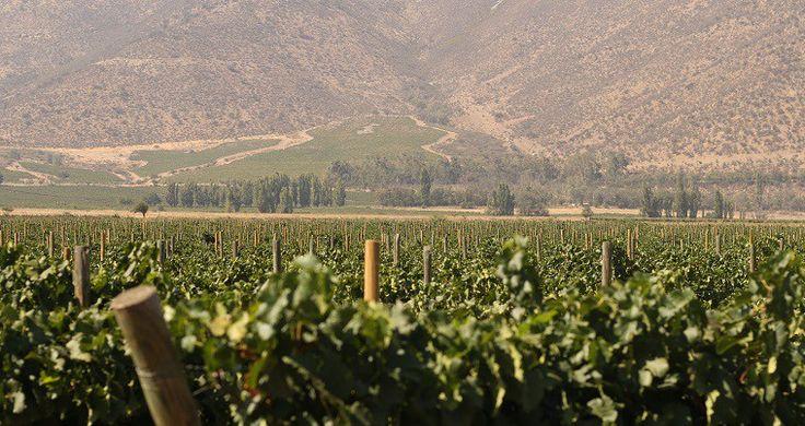 Visita e passeio de bicicleta na vinícola Santa Rita, Chile