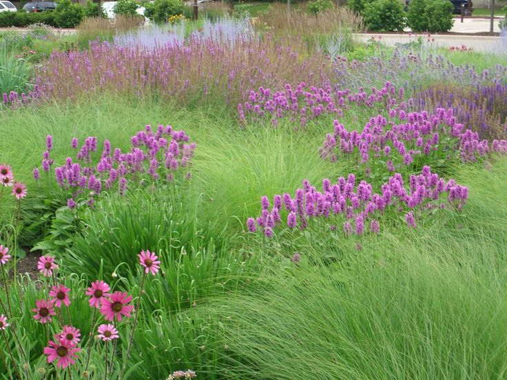 17 best images about garden designers roy diblik on for Grassy plants for landscaping