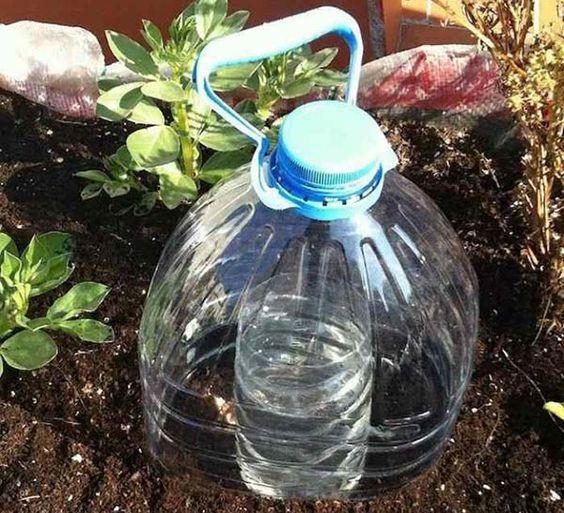 Aprenda um truque fantástico para manter as suas plantas saudáveis, estamos a falar de uma forma de irrigação muito económica e vai manter sempre as suas plantas com água no solo. O objetivo é fornecer um sistema eficiente e simples de instalar, que favoreça o aumento da produção diminuindo o desperdício de água.
