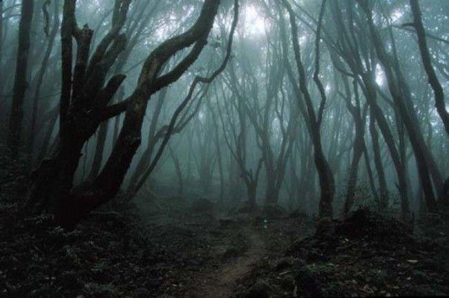 Desde a década de 1970, a polícia e as autoridades locais realizaram varreduras anuais da floresta para remover os corpos das pessoas que terminaram suas vidas lá.  No entanto, a floresta de Aokigahara é grosso, e não a cada corpo pode ser encontrado e removido.