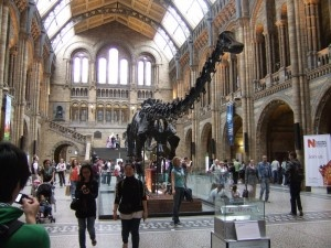 Natural History Museum, London   Spent many happy hours here with the boys...