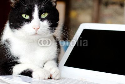 computer cat