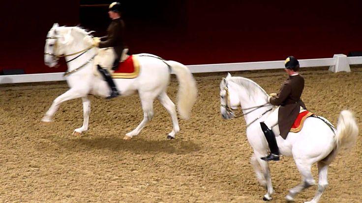 320 Best Horses Lipizzaner Images On Pinterest Horses