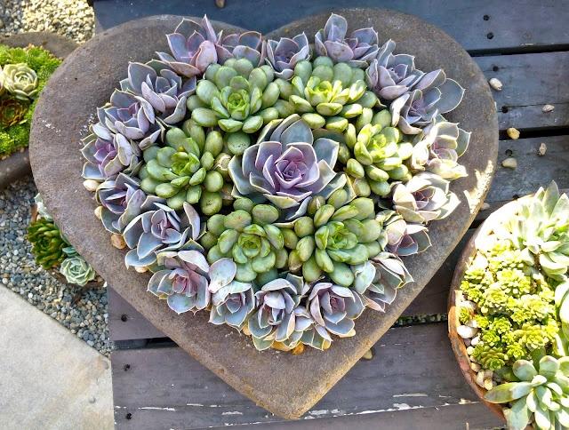 114 best succulent garden ideas images on pinterest plants gardening and succulents garden