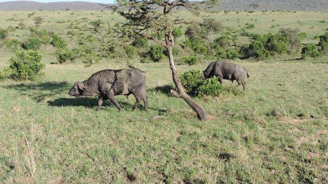 We offer affordable Kenya Adventure Safaris, Kenya Holiday