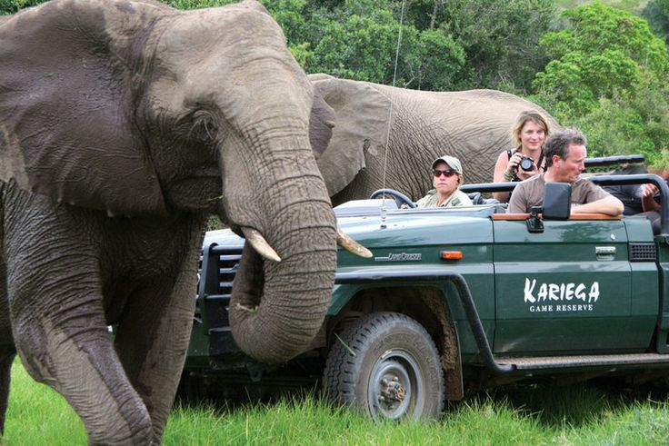 Volunteer World International @ Kariega - getting up close and personal to the natives!