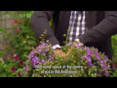 Campanula Hanging Basket - DIY with Green Your Day