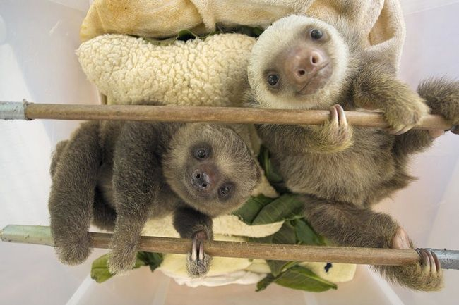 Hi, Friend is listed (or ranked) 3 on the list 47 Adorable Pictures of Sloths