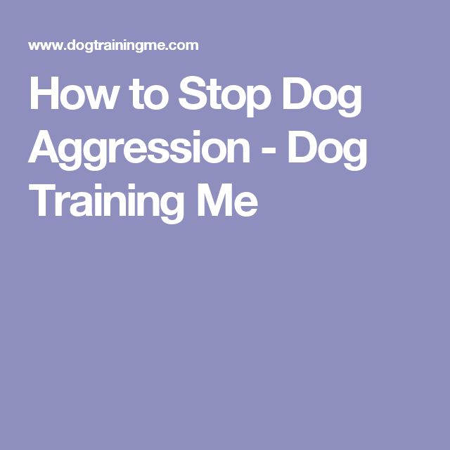 How to Stop Dog Aggression - Dog Training Me