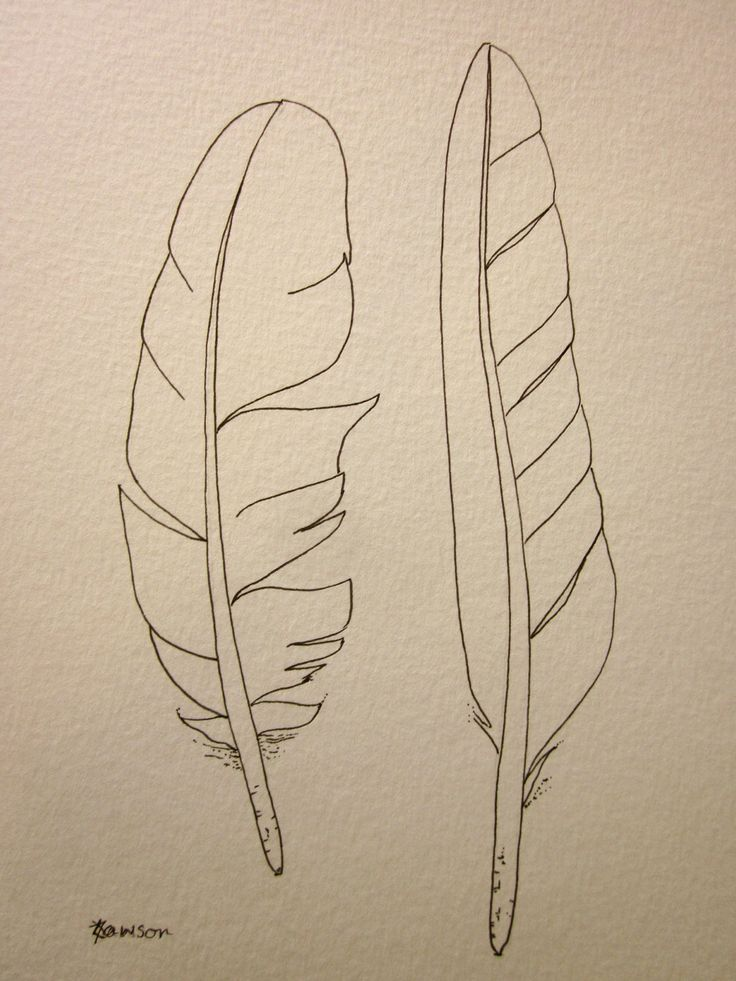 2 sea bird feathers -- original ink drawing