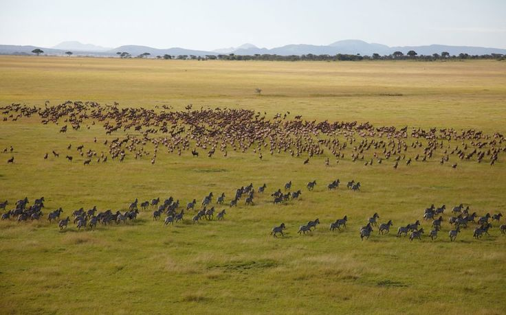 Breathtaking views of the migration across Singita Serengeti