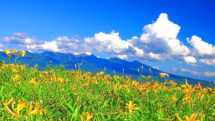 絶景 4K 夏の霧ヶ峰高原 ニッコウキスゲと八ヶ岳 Summer of Kirigamine plateau Day lily and Yat...