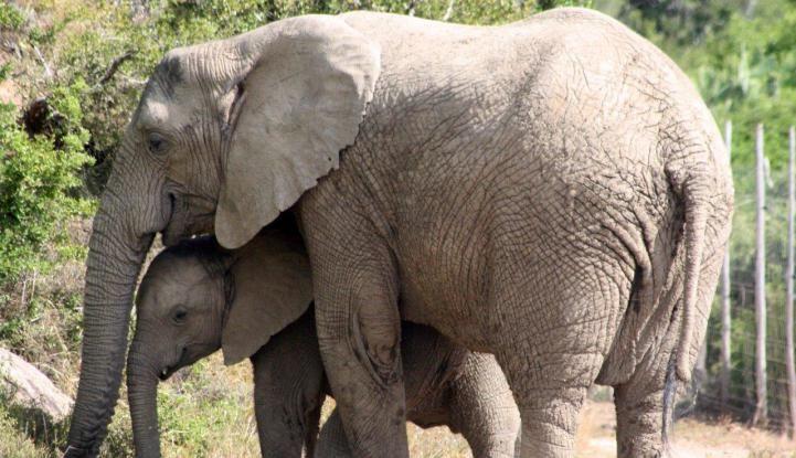 Kariega Big 5 Conservation Volunteer Program - The March Blog! http://www.volunteerworldintl.com/kariega-big-5-conservation-volunteer-program-blogs #volunteer #southafrica #kariega