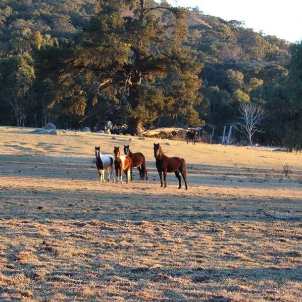 Some inquisitive Tenterfield locals #startthedaywithsomethingbeautiful