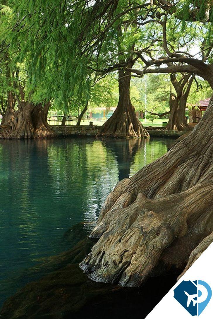 Si eres de los que disfrutan del contacto directo con la naturaleza, entonces el Lago de Camécuaro en Michoacán es una buena opción para salir de la cotidianidad.