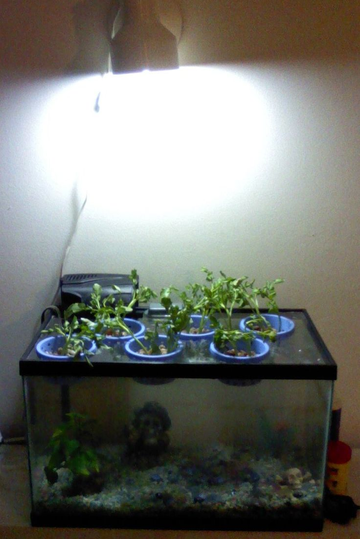 25 best ideas about 10 gallon fish tank on pinterest 1 for One gallon fish tank